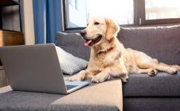 В Дании построят дом только для владельцев собак