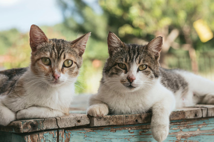 На Кипре обустроят пункты кормления для бездомных котов