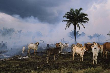 Человечество может остаться без чистого воздуха, воды и других благ природы