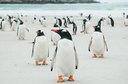 Продаётся один из Фолклендских островов