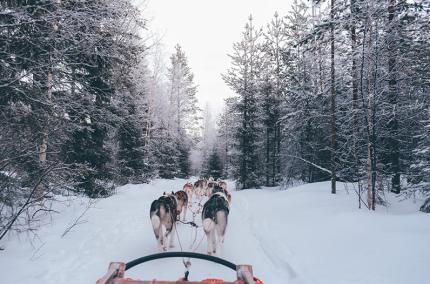 В Финляндии можно арендовать финна