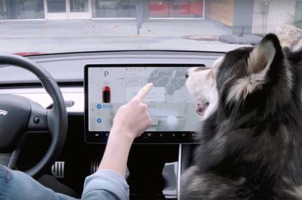 В электрокарах Tesla появился режим для собак