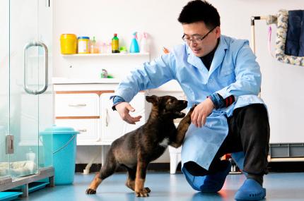Китайские учёные клонировали полицейского пса