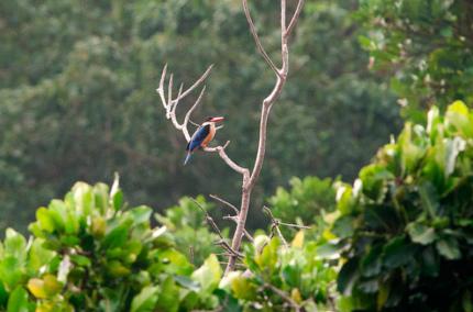Вход в тайский парк Симилан ограничили для туристов