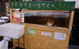 В Японии щенок шиба-ину управляет собственным киоском