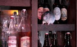 В Сан-Франциско открылось кафе с крысами
