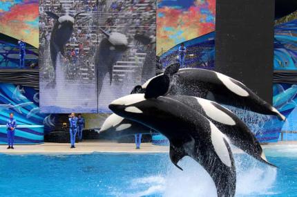 TripAdvisor прекратит продавать билеты на аттракционы с китами и дельфинами