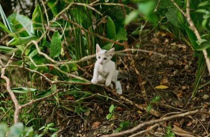 На Тайване примут закон, запрещающий есть котов и собак