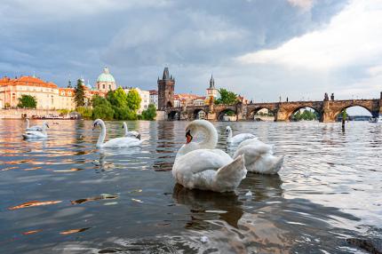 Этим летом в Праге хотят ввести карту туриста