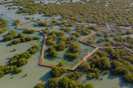 В Абу-Даби открылся мангровый парк с променадами