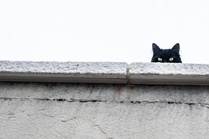 В Польше открылся музей кошек