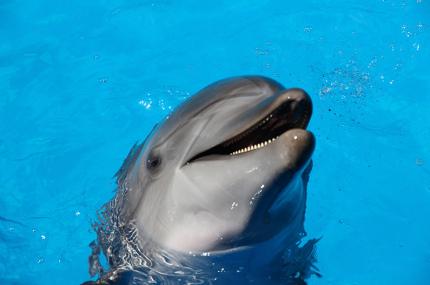 Дельфинов в океанариумах могут заменить роботы