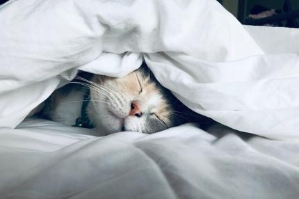 Учёные выяснили, что удалённая работа улучшает сон