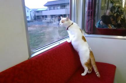 В Японии запустят поезд с кошачьим кафе